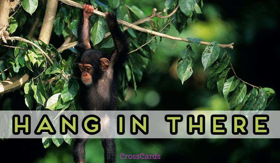 Free hang in there ecard email free personalized animals - Crosscards free ecards ...