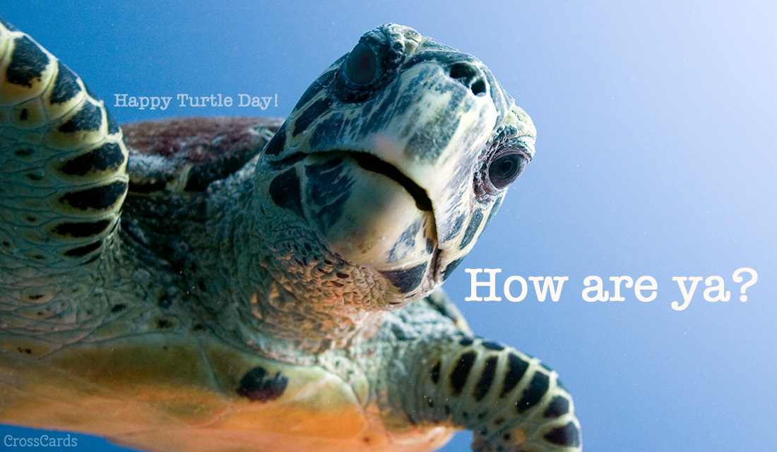 Happy Turtle Day! (5/23) ecard, online card