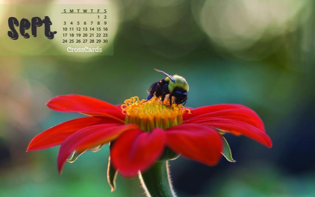 September 2017 - Bloom + Bee mobile phone wallpaper