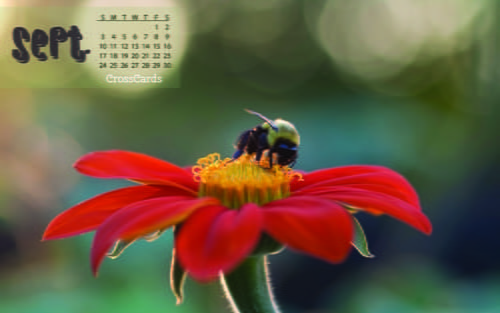 September 2017 - Bloom + Bee mobile phone wallpaper