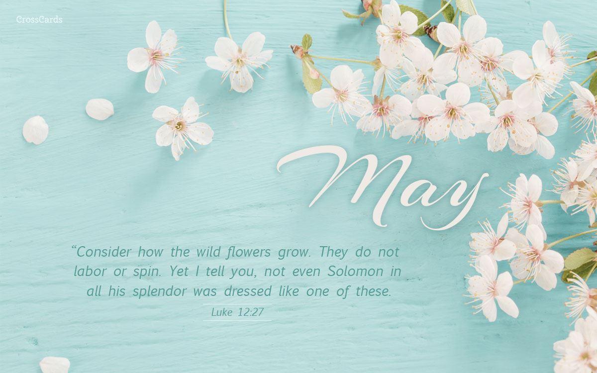Beautiful Spring Desktop Mobile Wallpaper Free Backgrounds