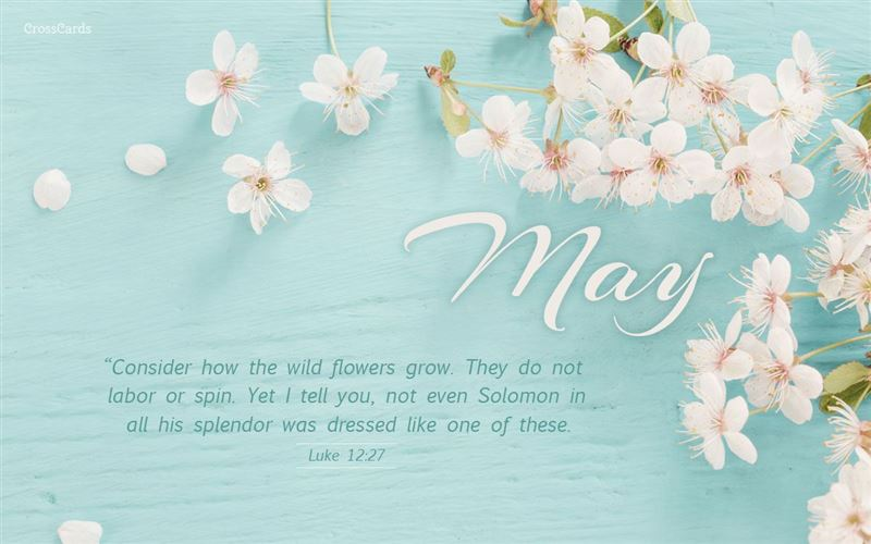 May - Consider How the Wildflowers Grow - Luke 12:27 mobile phone wallpaper