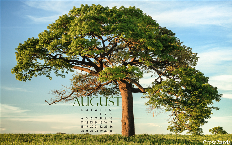 August 2019 - Shade Tree mobile phone wallpaper