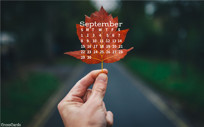 September 2019 - Leaf mobile phone wallpaper