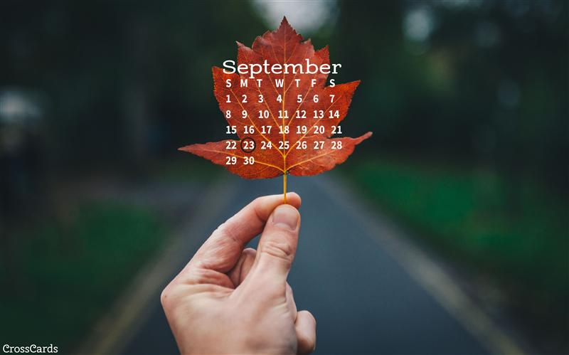 September 2019 - Leaf mobile phone wallpaper