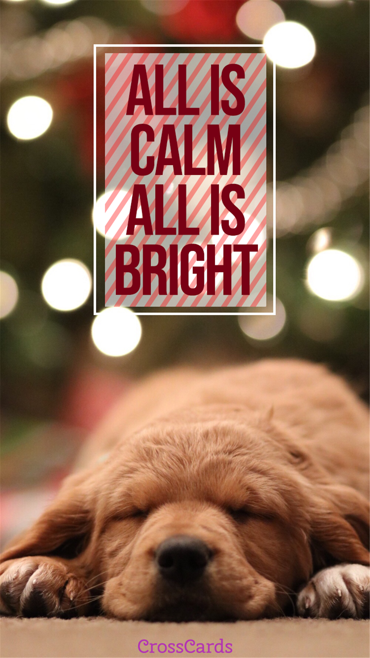 All is Calm, All is Bright ecard, online card