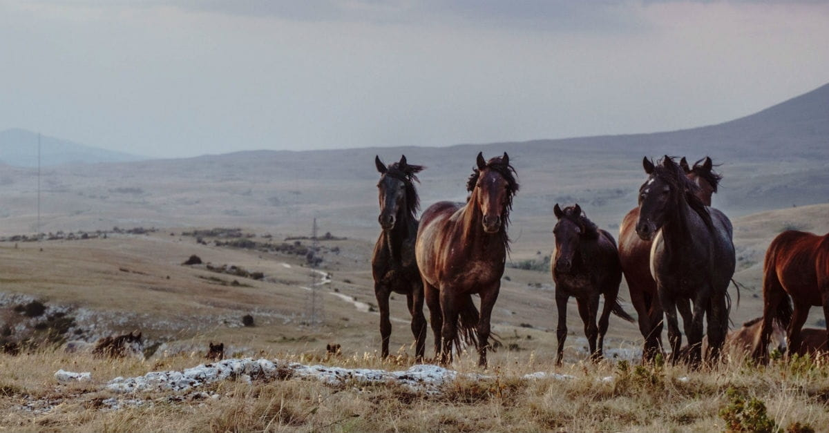 6. Horses and Chariots of Fire (2 Kings 6:17)