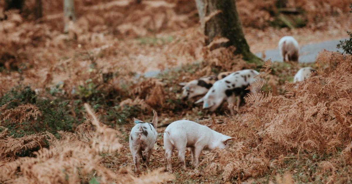 7. Jesus Sends Demons into a Herd of Pigs (Matthew 8:28-34)