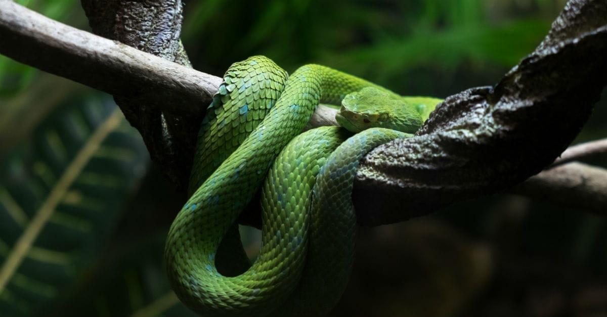 9. A Viper Bites Paul (Acts 28:1-6)