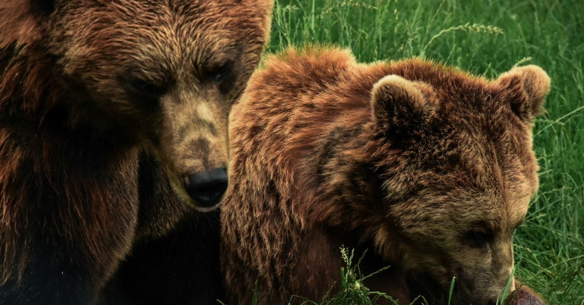 10. Two Killer Bears (2 Kings 2:23-24)
