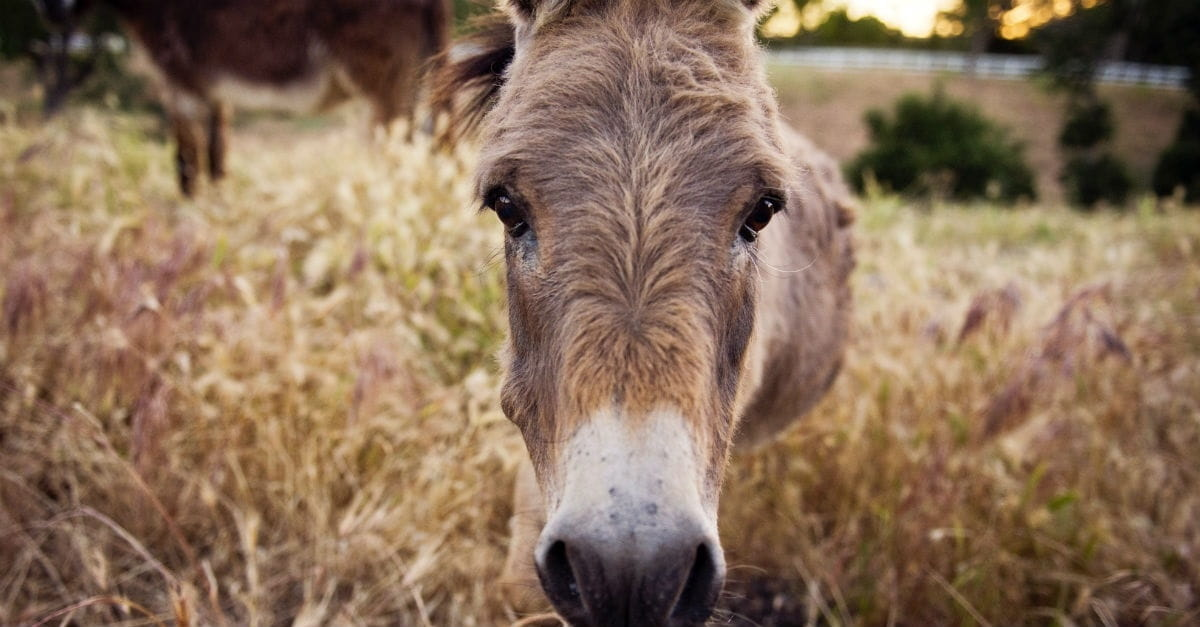 10 Weird Animal Stories of the Bible