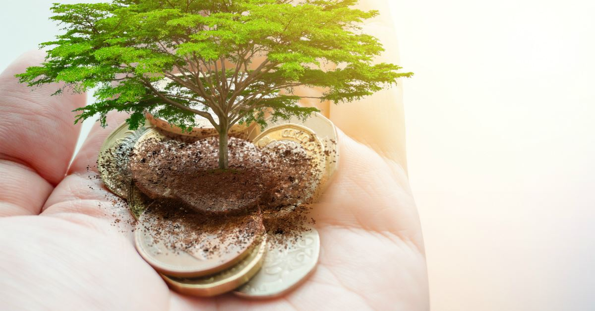 palm full of coins with dirt and tree growing from center