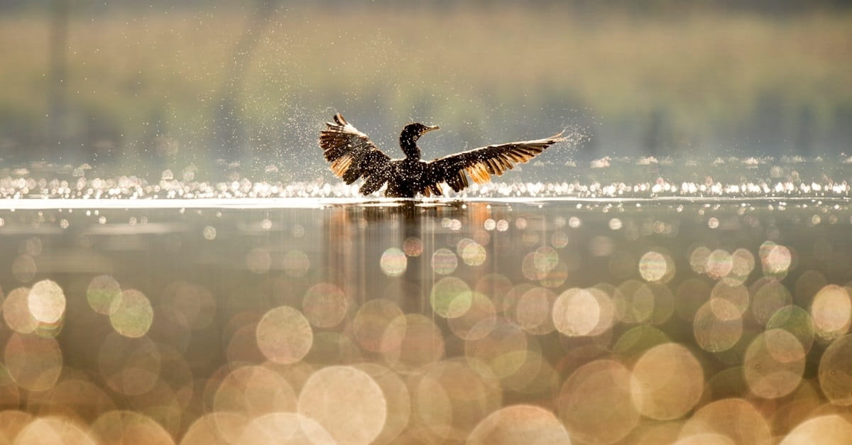 The Holy Spirit (aka The Wild Goose)