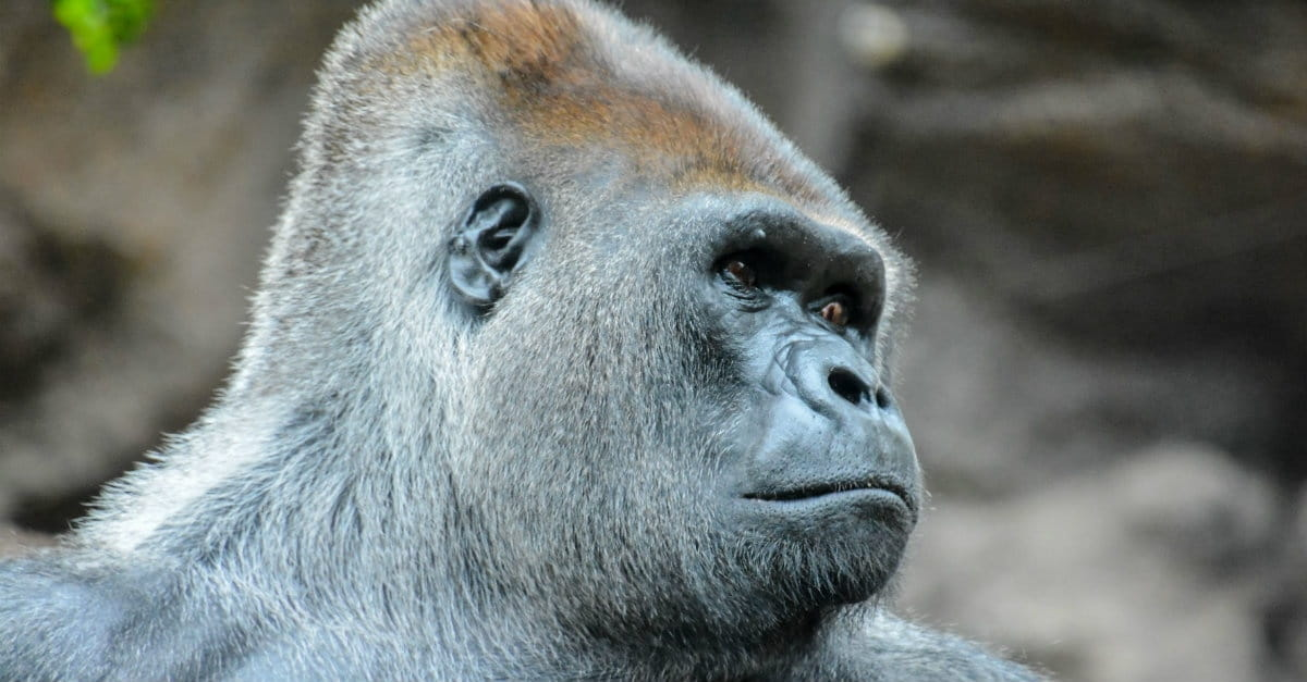 Cincinnati Zoo Outrage: Are Animals Made in the Image of God?