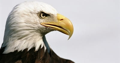 What Do Eagles Have to Teach Us about God?
