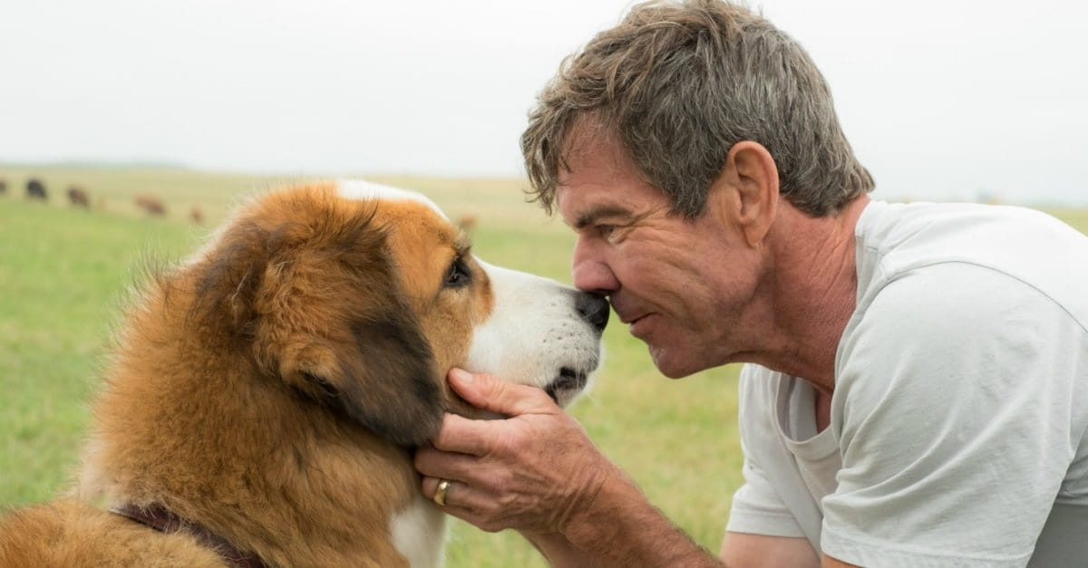 "Premise of <i>A Dog's Purpose</i> May Give Some Viewers ""Paws"""