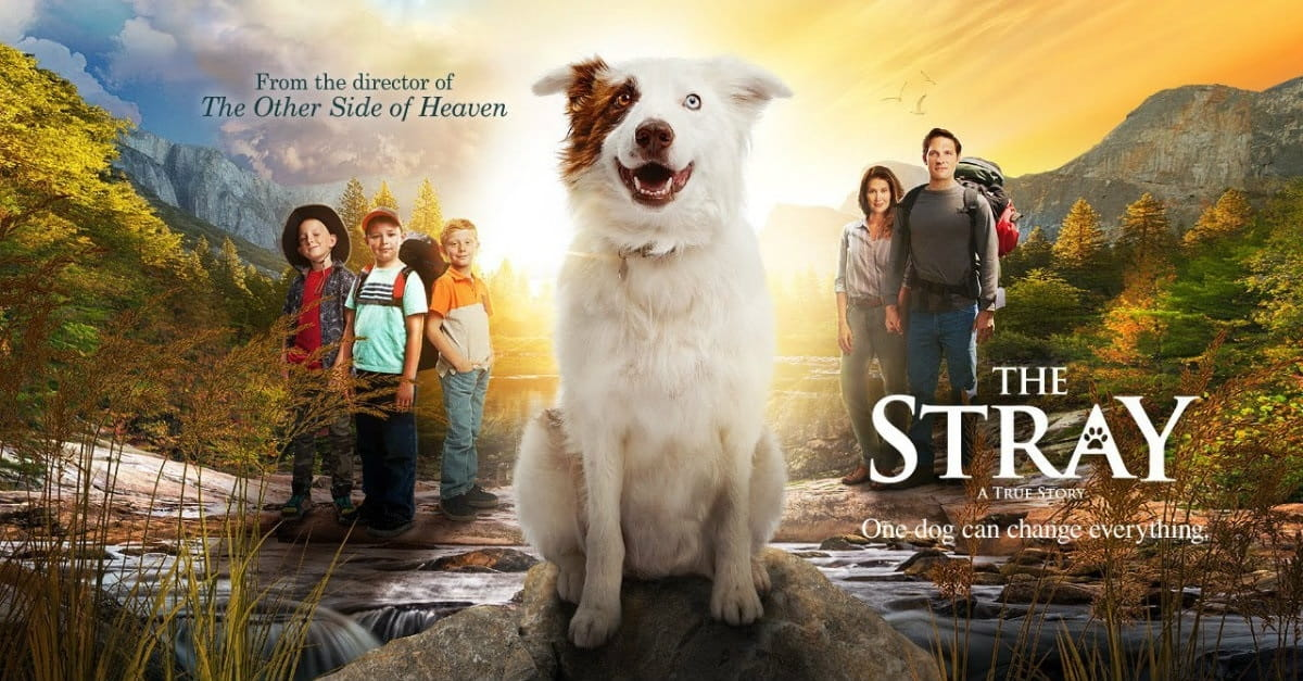 <i>The Stray</i> is Doggedly Determined but Barks Too Softly