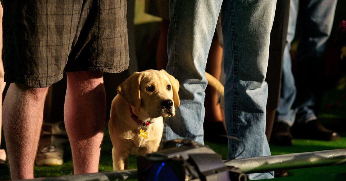 2. <em>Marley and Me: The Puppy Years</em> (Hulu)