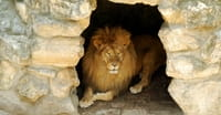 10. Daniel was an octogenarian when he was thrown into the lion's den.