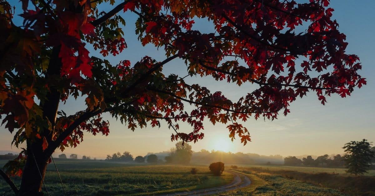 10 Beautiful Psalms for Autumn