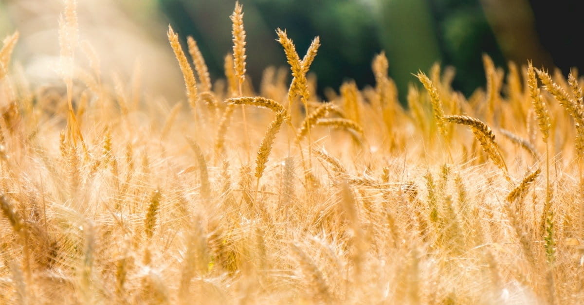 The Book of Ruth: So Much More Than a Love Story