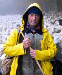 Pastor, Abandon Not the Flock