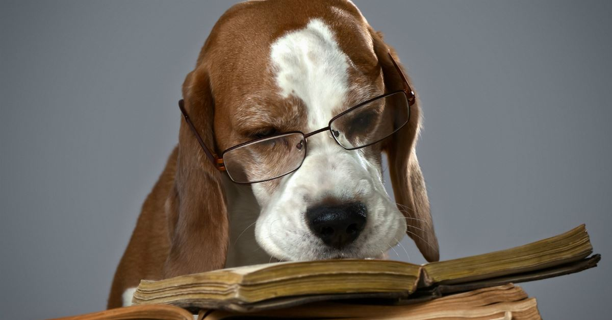 dog with glasses on sniffing open book as if reading