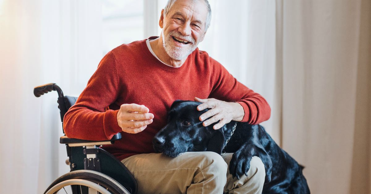 loving dog resting head on lap of smiling man in wheelchair