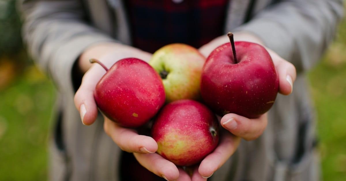 8. Go Apple Picking