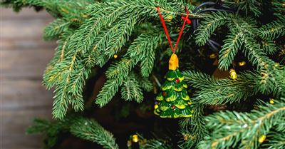 6. Take notice while decoroating the tree.