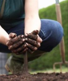 Finding Community in a Garden