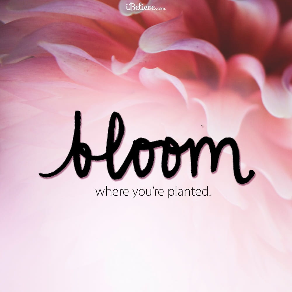 bloom-planted-ydp
