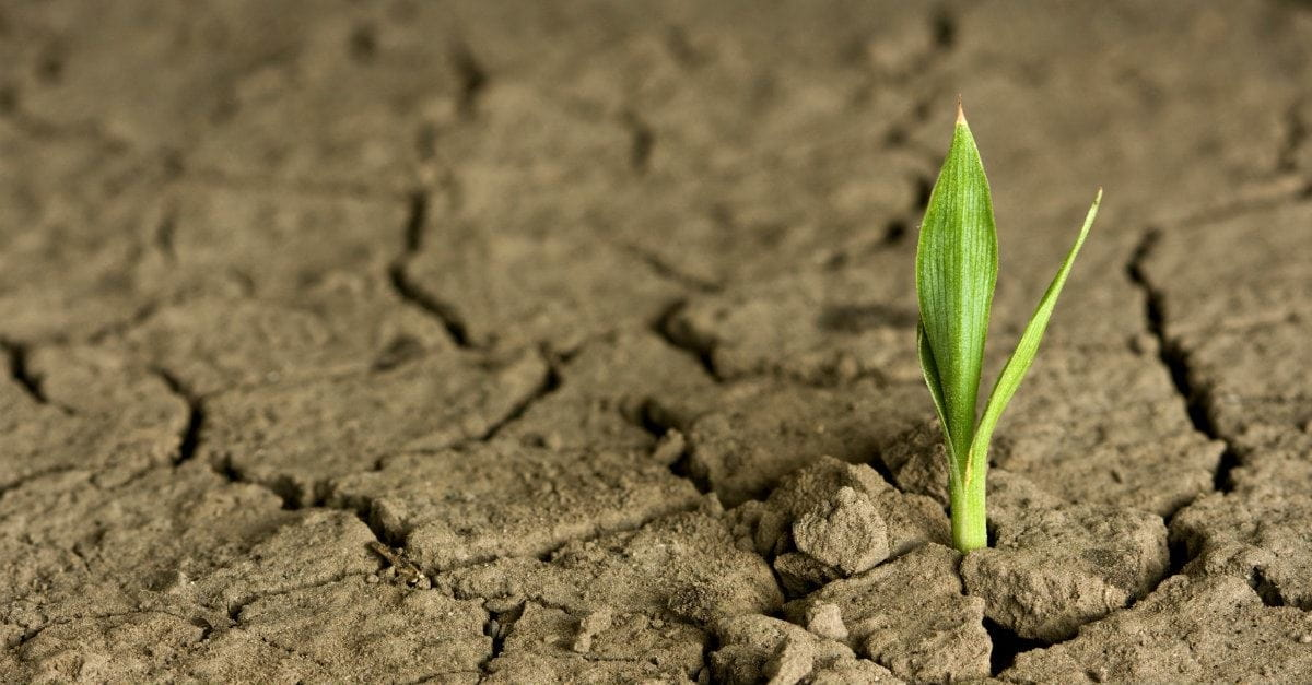 How to Grow Your Faith When It's Been Stagnant