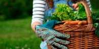 5 Reasons to Start Your Own Garden