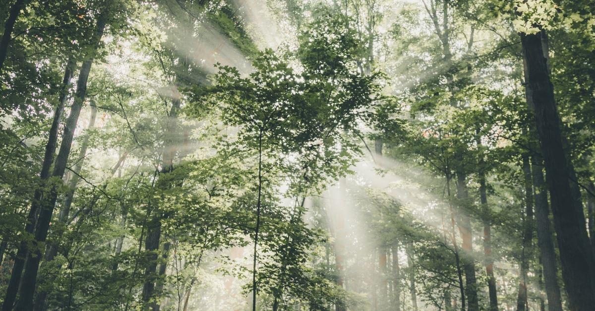 sunlight piercing through treetops