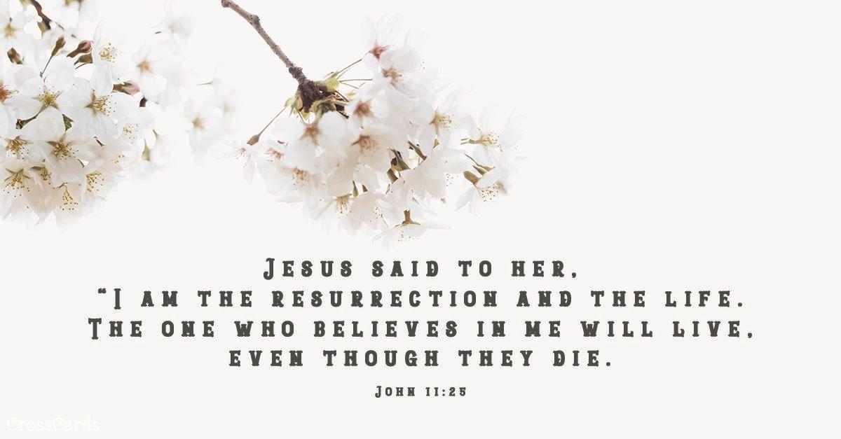 Your Daily Verse - John 11:25
