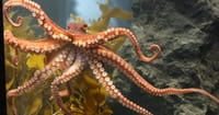 Darwinism Versus the Octopus: An Evolutionary Dilemma