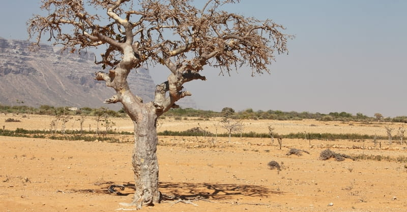 Severe Drought in Somalia Turns Deadly