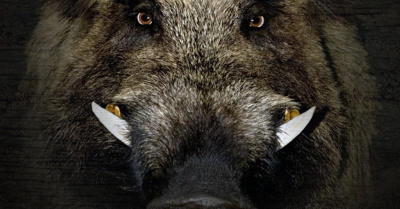 10 Wild Boars T D Militants