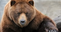 Creationists Cheer Findings in Bear Genome Sequencing Project