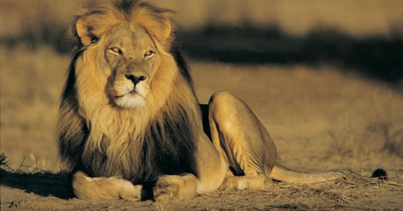 10 Times God Used Animals to Accomplish His Purposes