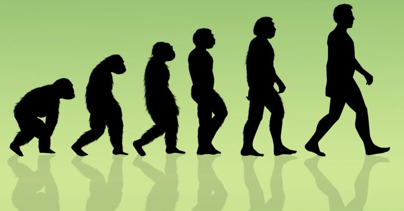 Evolutionists Try to Nourish Darwin's Wilting Tree of Life