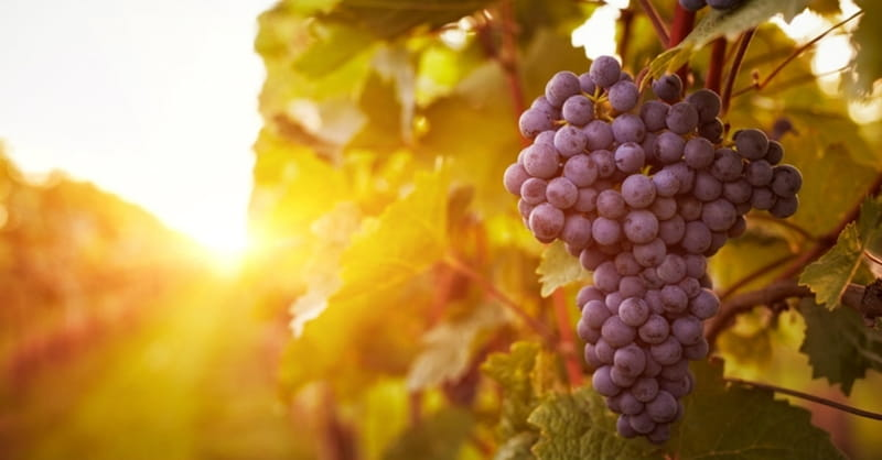 Archaeologists Discover Evidence of Naboth's Vineyard, Referenced in Bible