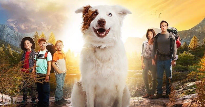 Christian Movie Director: God Can Use Dogs as Guardian Angels
