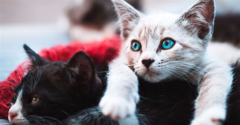 N.Y. Legislature Bans Cat Declawing, Approves Abortion up to Birth