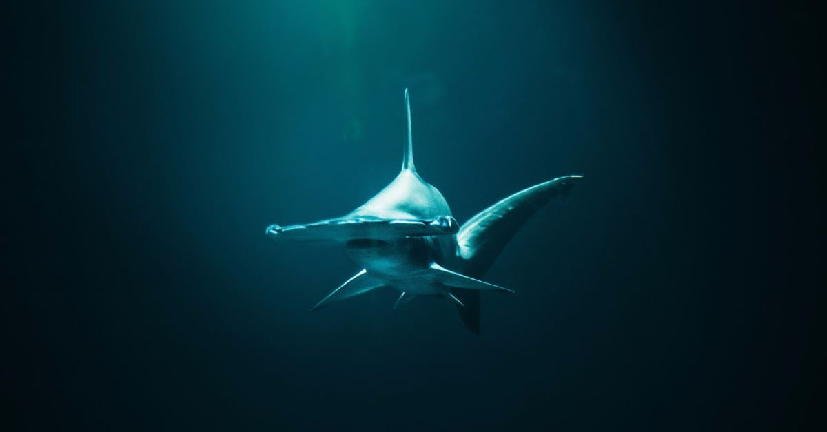 Shark Week to Devour Millions: What Our Rapt Attention Reveals about Our Spiritual Condition