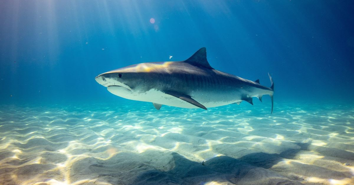 The Threat of Great White Sharks and Contact Lenses that Zoom: God's Call to Excellence