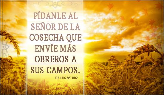 Pídanle al Señor de la cosecha que envíe más obreros a sus campos.