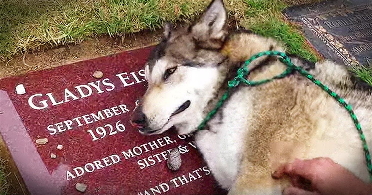 Emotional dog cries over its owner's grave