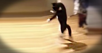 15 Seconds Into This Cat Video, You'll Laugh SO Hard